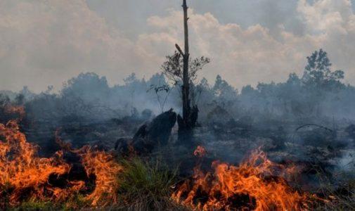 Indonesia Darurat Karhutla, Benarkah?
