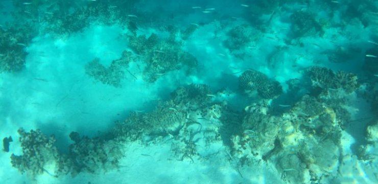 Dampak Kualitas Air pada Kesehatan Karang di Teluk Prigi