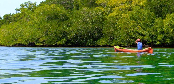 Penilaian Kawasan Lindung Mangrove di Pantai Timur Surabaya