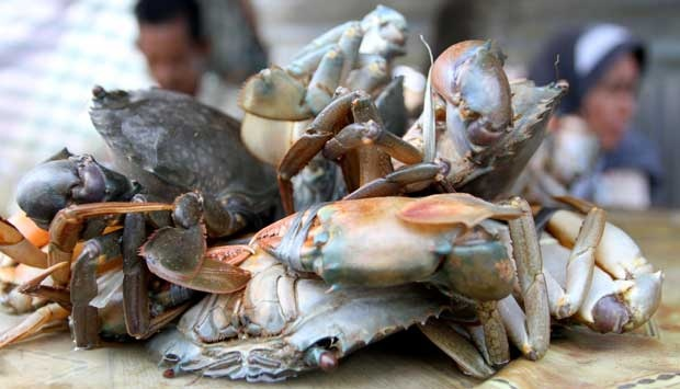 Budidaya Kepiting dalam Wadah dengan Sistem Akuakultur Resirkulasi
